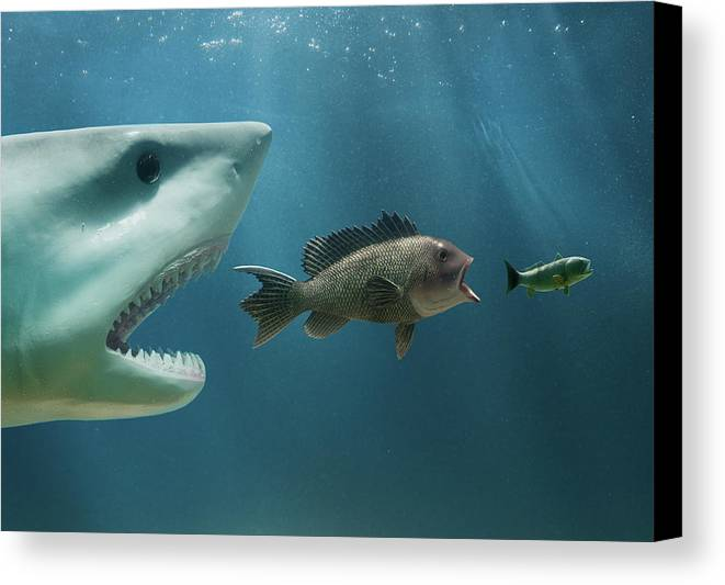 Horizontal Canvas Print featuring the photograph The Food Chain by PM Images