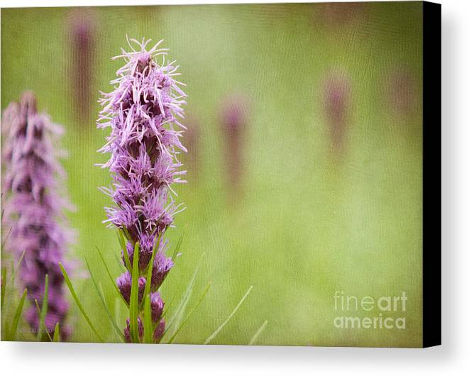 Floral Canvas Print featuring the photograph Tango by Beve Brown-Clark Photography