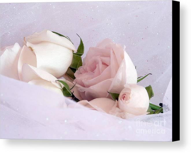 Cream Canvas Print featuring the photograph Bed Of Roses by Georgia Sheron