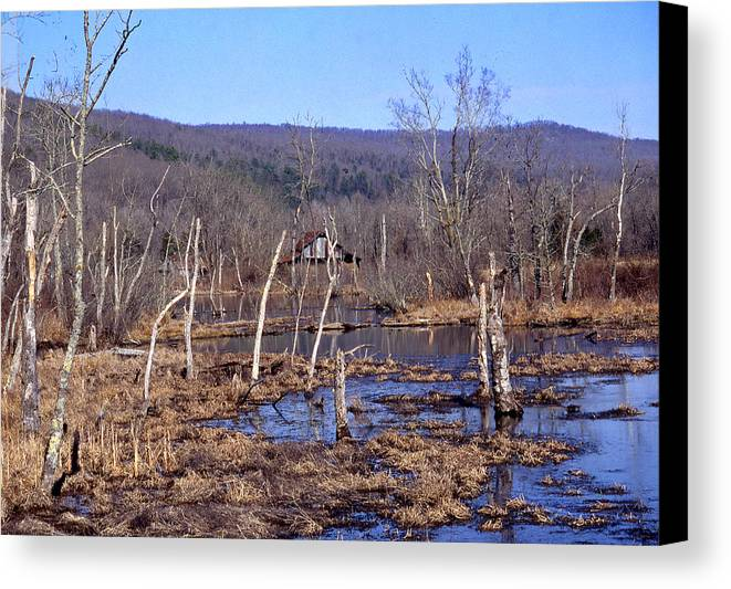 Canvas Print featuring the photograph Boxely Swamp2 by Curtis J Neeley Jr