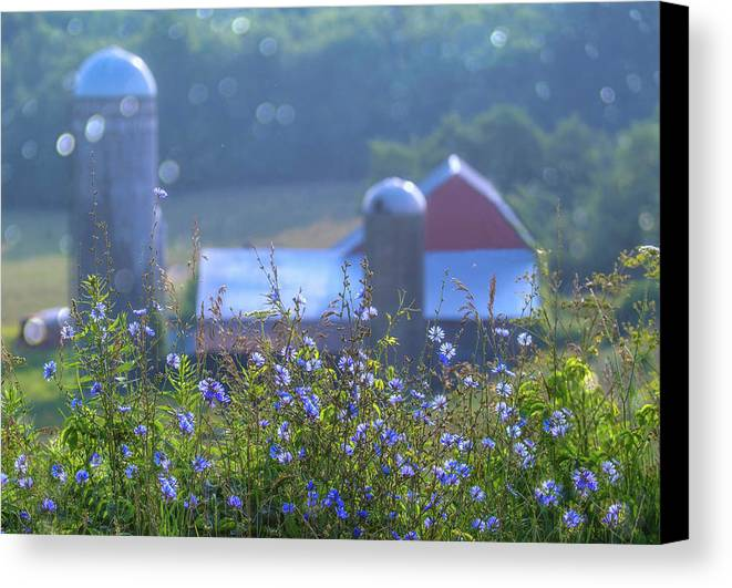 Barn Farm Flowers Cornflower Landscape Tiogacounty Country Wellsboro Canvas Print featuring the photograph Cornflower And Barn by Bernadette Chiaramonte