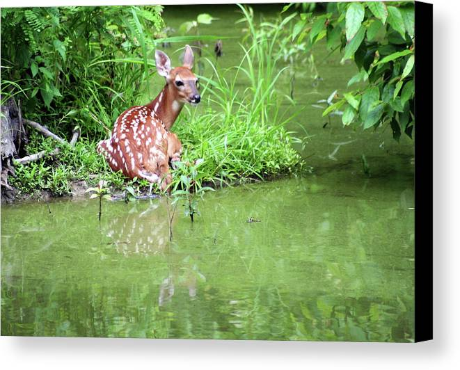 Photograph Canvas Print featuring the photograph Fawn White Tailed Deer Wildlife by Linda Pearson