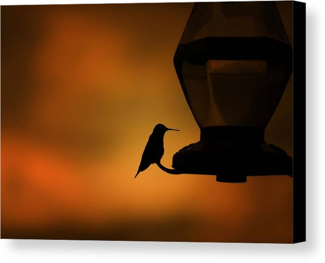 Hummingbird Canvas Print featuring the photograph Hummingbird After The Storm by Al Mueller