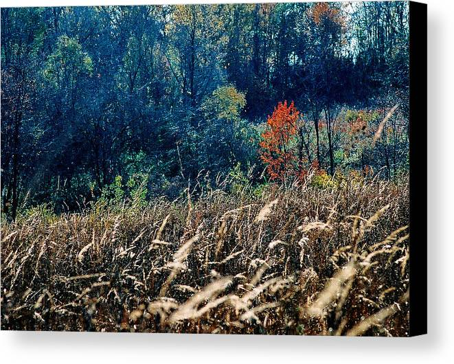 Landscape Canvas Print featuring the photograph Prairie Edge by Steve Karol