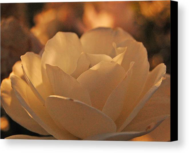 Open Canvas Print featuring the photograph Rosy Afternoon 5 by Jean Booth