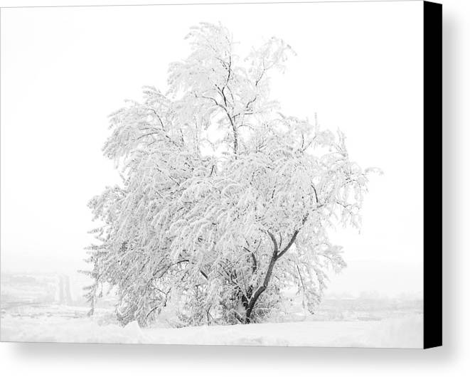 Snow Canvas Print featuring the photograph White On White by Marilyn Hunt