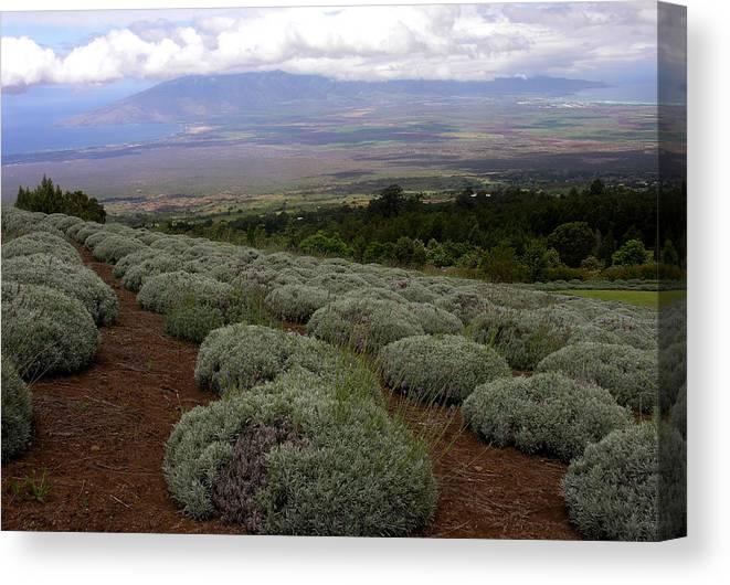 Maui Canvas Print featuring the photograph Maui Lavender Farm by Robert Lozen