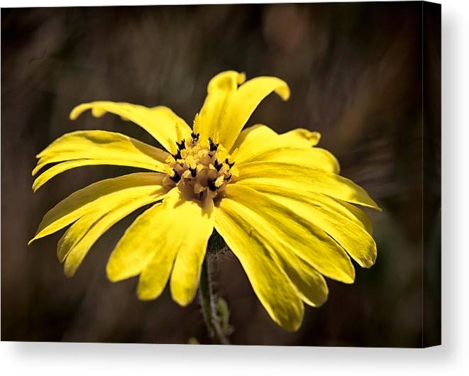 Flower Canvas Print featuring the photograph Yellow Flower by Betty Depee