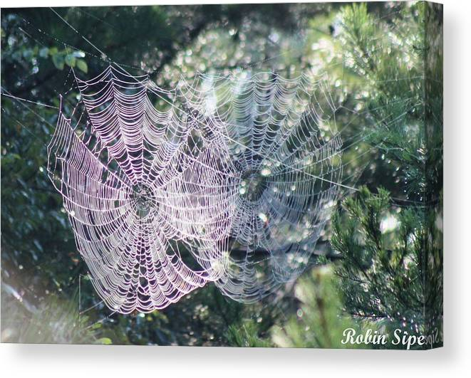 Spider Web Canvas Print featuring the photograph Double Webbed by Robin Vargo