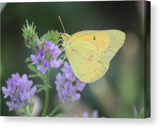 Solace Canvas Print featuring the photograph Summer Solace by David Jones