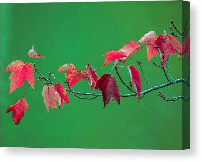 Canvas Print featuring the photograph Red Leaves by Brian Stevens