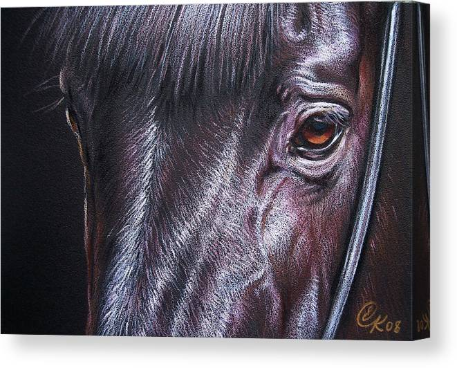 Horse Animal Portrait Equine Drawing Canvas Print featuring the drawing Black Stallion by Elena Kolotusha