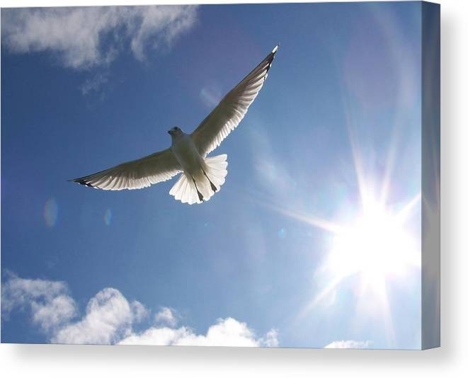 Gull Canvas Print featuring the photograph Freedom - Photograph by Jackie Mueller-Jones