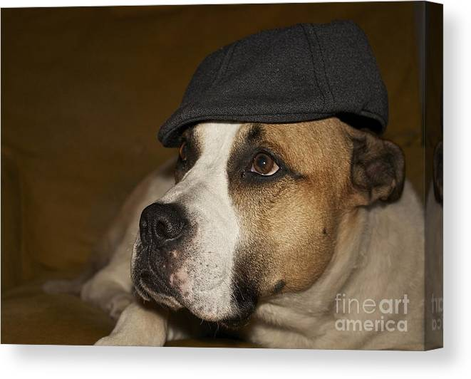 Dog Canvas Print featuring the photograph Gentleman by Linda Bianic