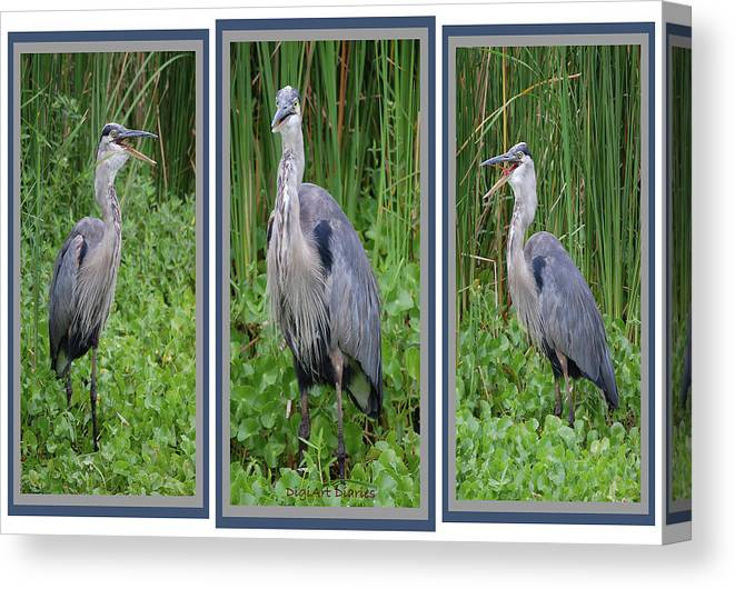 Bird Canvas Print featuring the digital art Great Blue Heron Collage by DigiArt Diaries by Vicky B Fuller