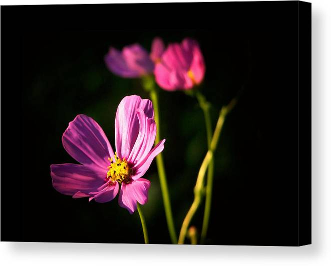 Flowers Canvas Print featuring the photograph Three Flowers by Karen Scovill