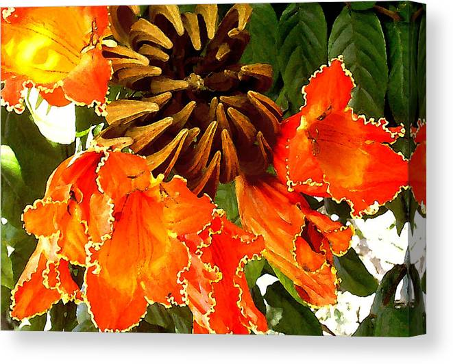 Hawaii Iphone Cases Canvas Print featuring the photograph African Tulip Tree by James Temple