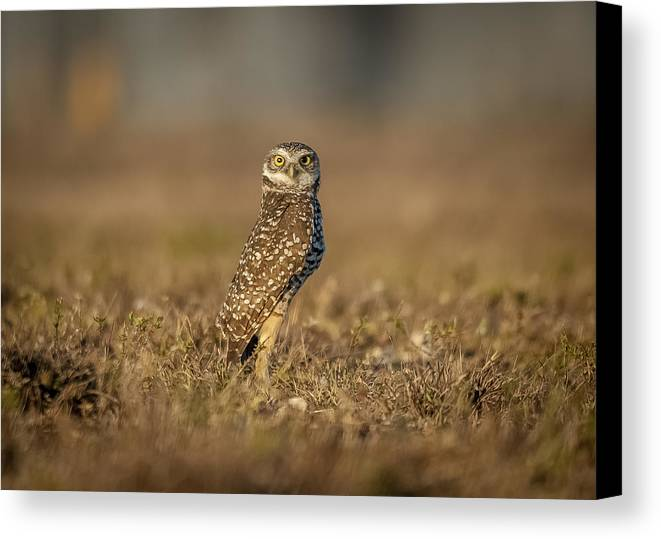 Owl Canvas Print featuring the photograph Alert Owl by Scott Mullin