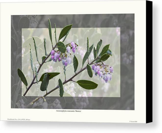 Manzanita Canvas Print featuring the photograph Arctostaphylos Manzanita 'monica' by Saxon Holt
