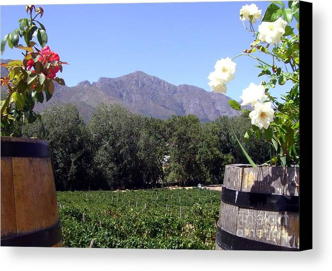 Vineyard Canvas Print featuring the photograph At The Rickety Bridge Winery by Barbie Corbett-Newmin