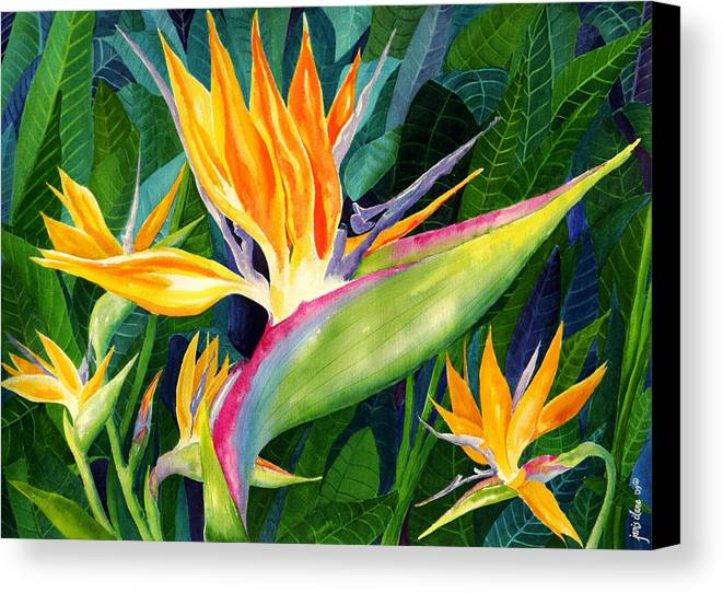 Flower Paintings Canvas Print featuring the painting Bird-of-paradise by Janis Grau