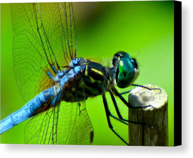 Dragonfly Canvas Print featuring the photograph Blue Dragonfly by Jean Wright