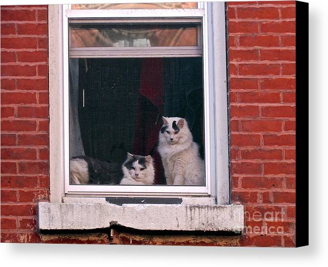 Cats Canvas Print featuring the photograph Cats On A Sill by Randi Shenkman
