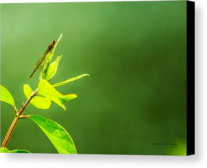 Heron Heaven Canvas Print featuring the photograph Damselfly by Edward Peterson