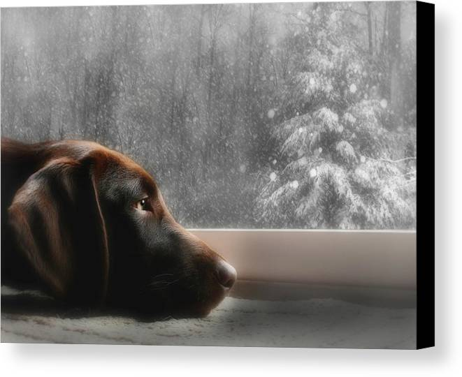 Sienna Canvas Print featuring the photograph Dreamin' Of A White Christmas by Lori Deiter