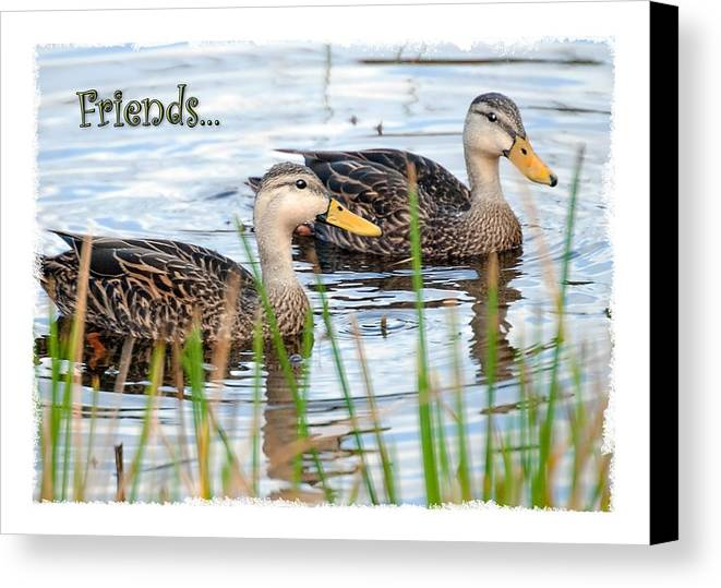 Card Canvas Print featuring the photograph Ducks by Mark Baker
