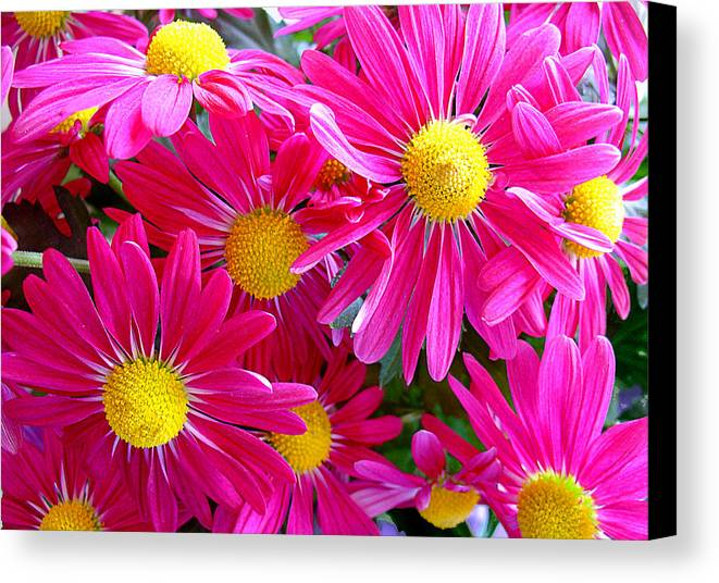 Flowers Canvas Print featuring the photograph Hot Pink by Julie Palencia