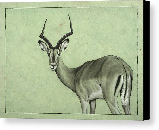 Impala Canvas Print featuring the painting Impala by James W Johnson