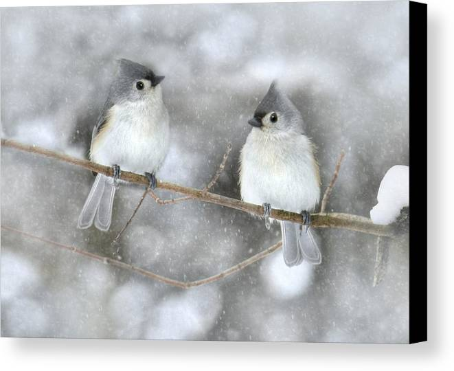 Bird Canvas Print featuring the photograph Let It Snow by Lori Deiter