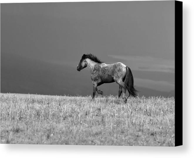 Beautiful Canvas Print featuring the photograph Mustang 2 Bw by Roger Snyder