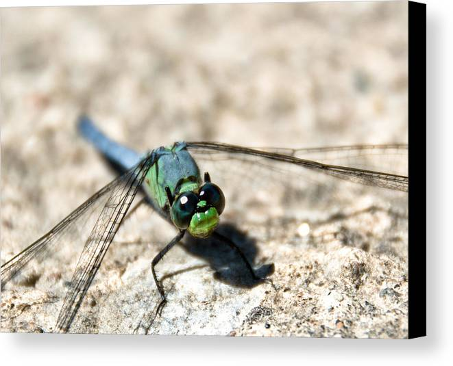 Dragonfly Canvas Print featuring the photograph Pondhawk Upclose by Cheryl Baxter