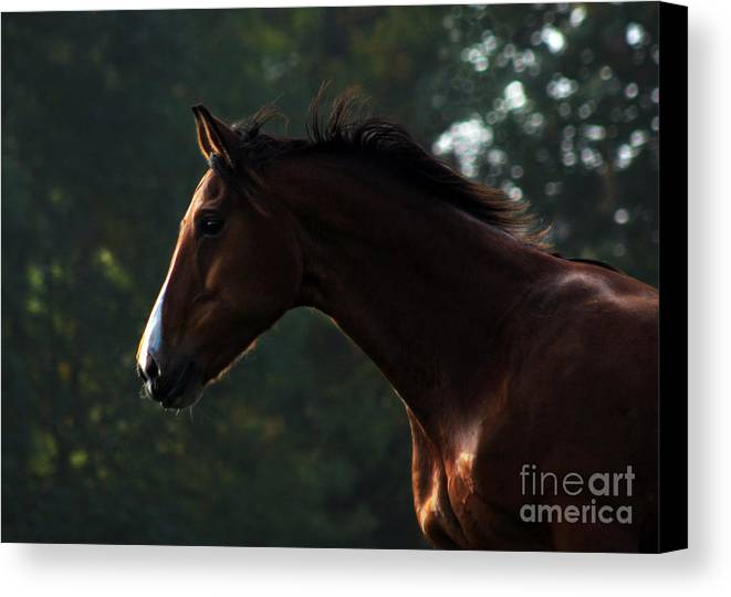 Horse Canvas Print featuring the photograph Portrait Of A Horse by Angel Ciesniarska
