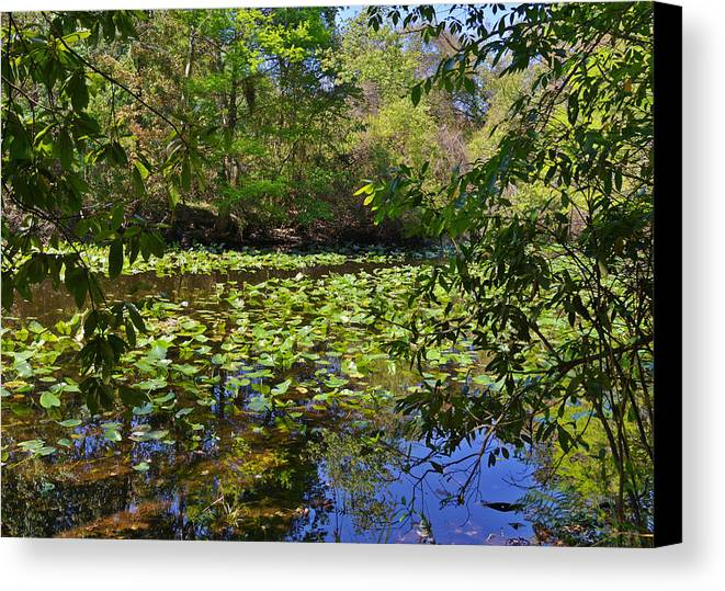 Pond Canvas Print featuring the photograph Ravine Gardens - A Different Look At Florida by Christine Till