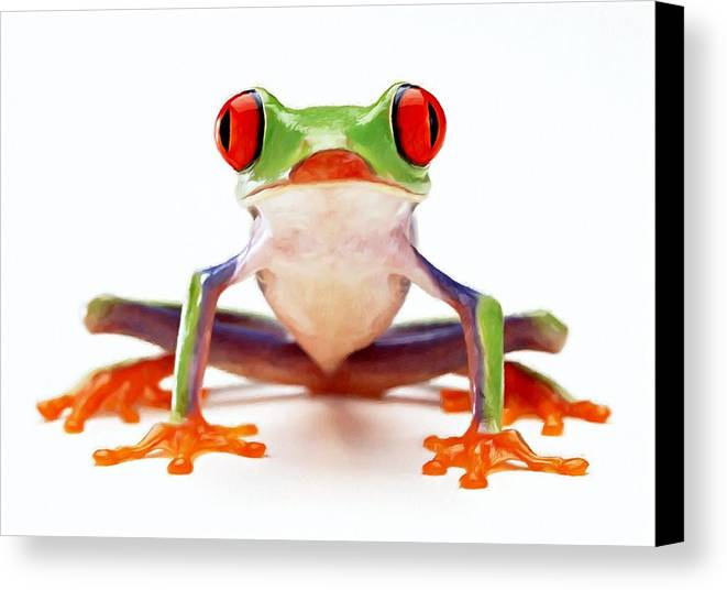 Amphibian Canvas Print featuring the painting Red-eye Tree Frog 2 by Lanjee Chee