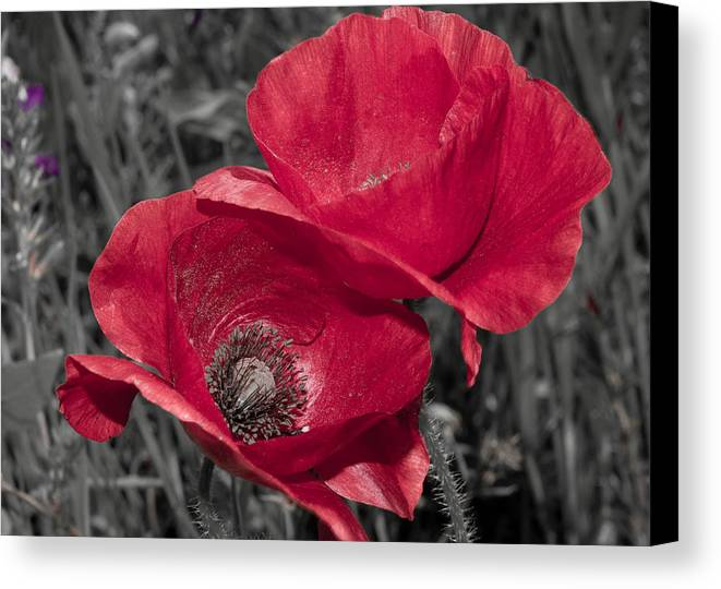 Poppy Canvas Print featuring the photograph Red by Terry Walsh