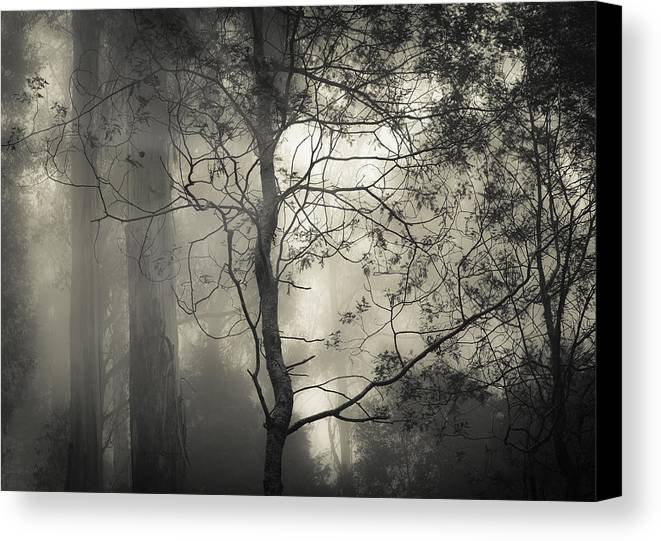 Fog Canvas Print featuring the photograph Silent Stirring by Amy Weiss