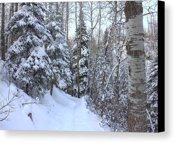 Snow Canvas Print featuring the photograph Snowy Hiking Trail by Jim Sauchyn