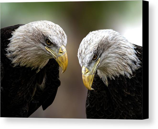 Eagles Canvas Print featuring the photograph Soul Mates by Bob Orsillo