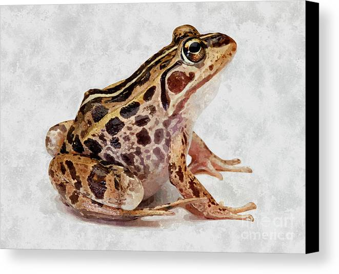 Amphibian Canvas Print featuring the painting Spotted Dart Frog by Lanjee Chee