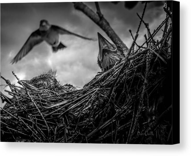 Swallow Canvas Print featuring the photograph Tree Swallows In Nest by Bob Orsillo