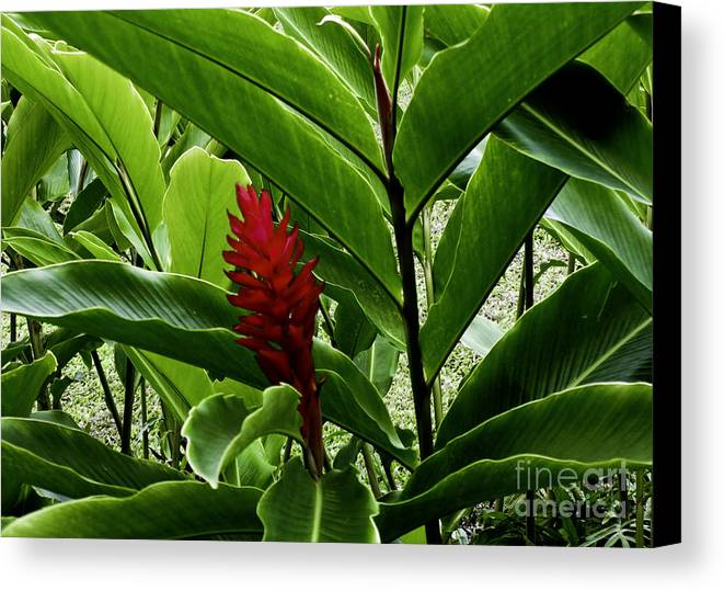 Flower Canvas Print featuring the photograph Tropical by Kelley Belisle