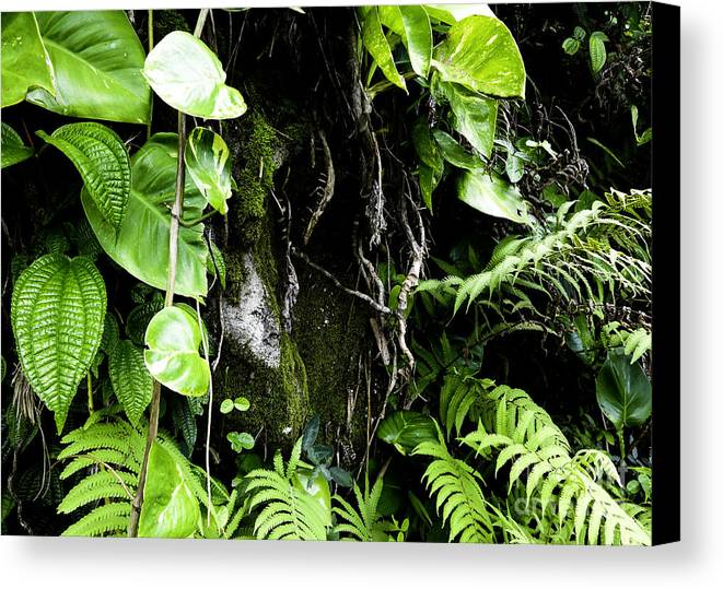 Tropical Canvas Print featuring the photograph Tropical Plants by Kelley Belisle