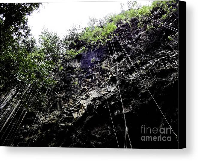 Tropical Canvas Print featuring the photograph Tropical Vines by Kelley Belisle