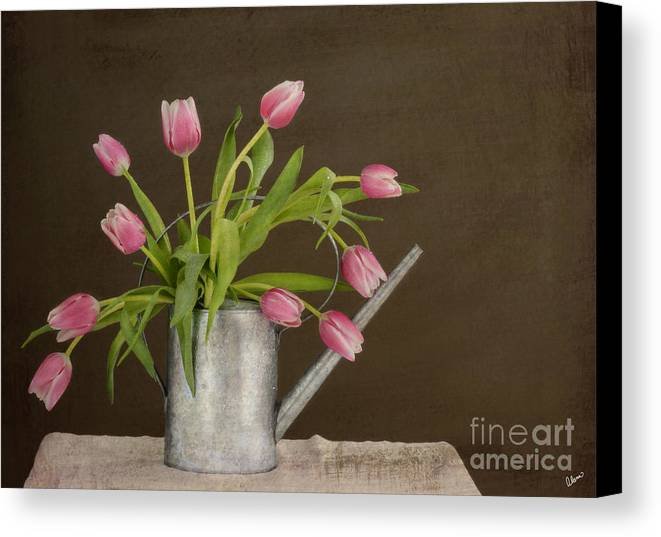 Tulips Canvas Print featuring the photograph Tulip Bouquet by Alana Ranney
