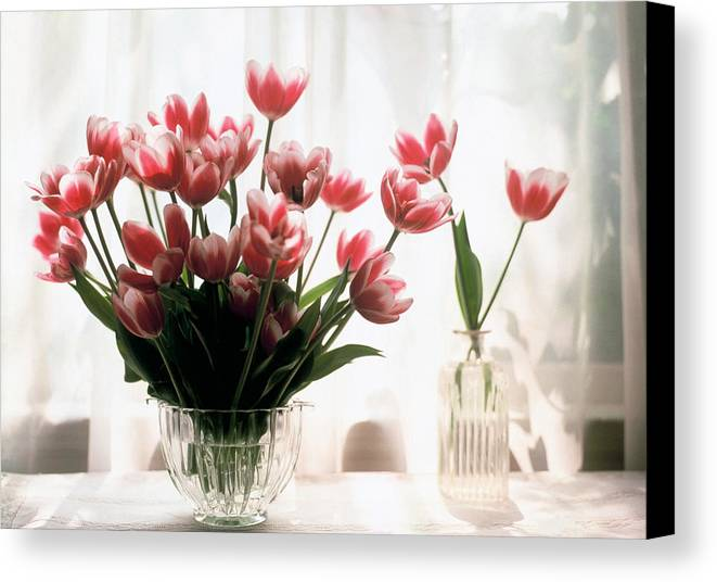 Still-life; Tulips; Flower; Vase; Interior; Pink; White; Floral Canvas Print featuring the painting Tulip by Jeanette Korab