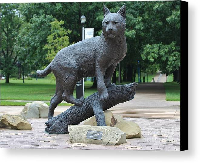 University Of Kentucky Wildcat Canvas Print / Canvas Art by Angela G